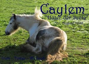 Caylem